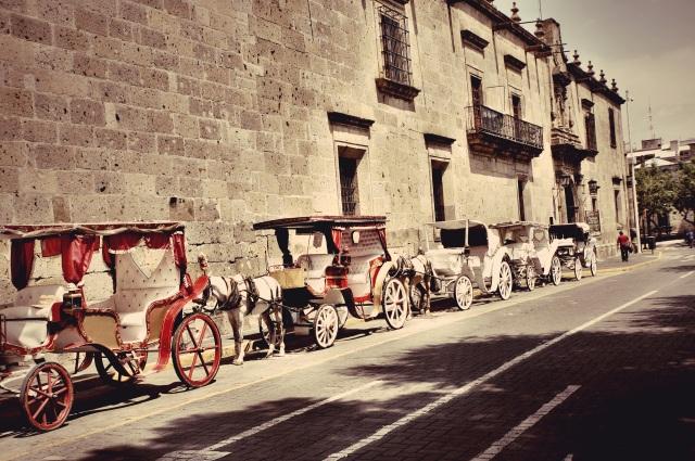 Calandrias en Guadalajara